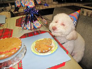 Smiling dog with cake